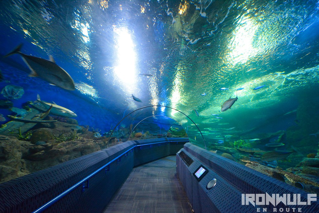 The aquarium tunnel at the Underwater World Pattaya